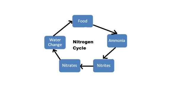 Fish tank cycle the diagram illustrates the different stages of the nitrogen cycle ccuart Gallery