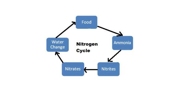Fish tank cycle methods of cycling a fish tank ccuart Choice Image
